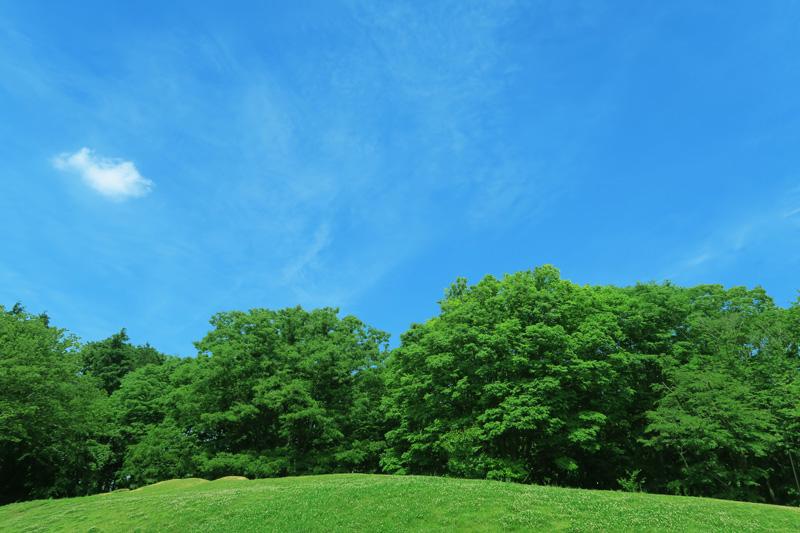 夏の芝生と青空と雲と緑の木々